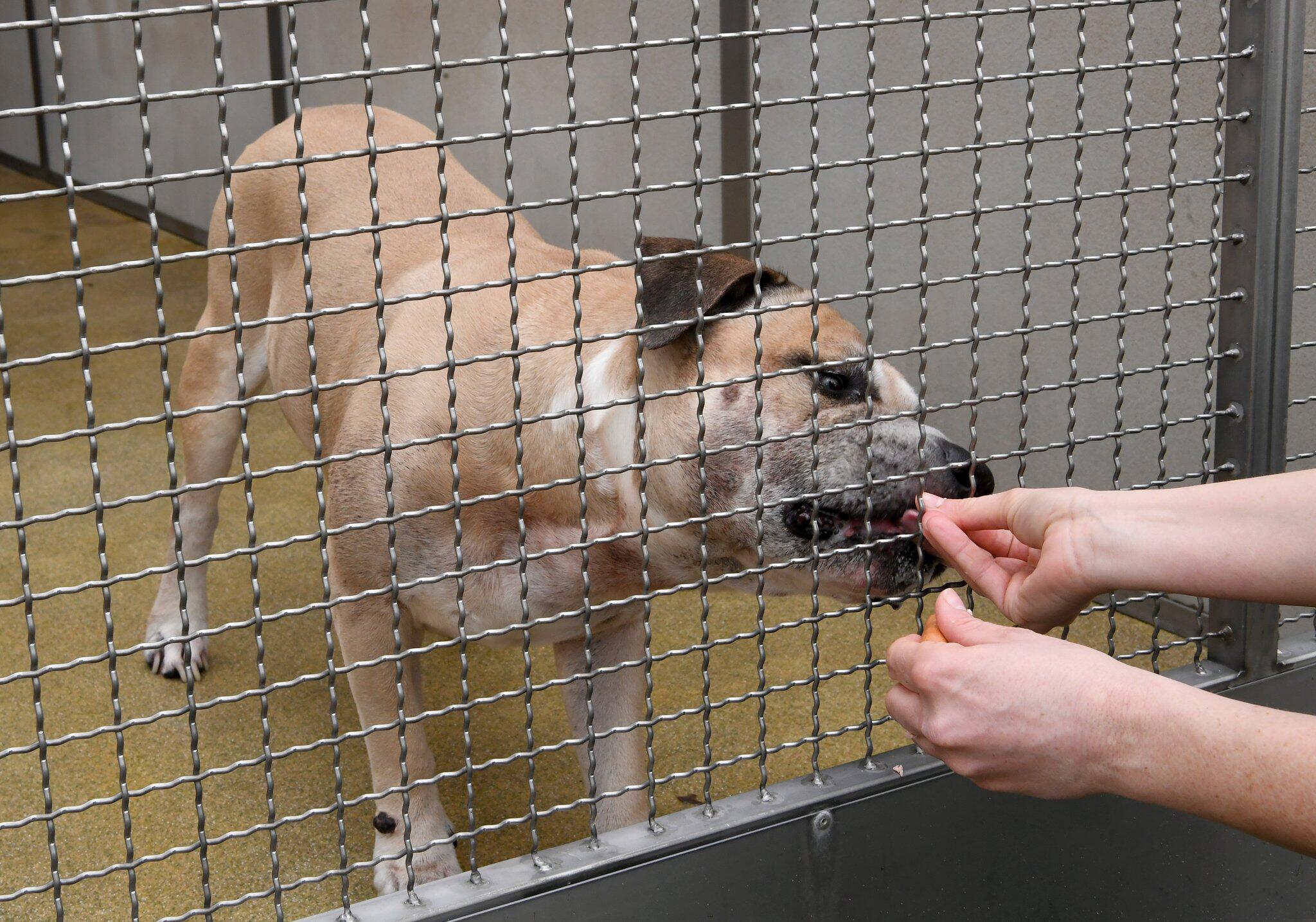 Bild zu Hundeattacke in Hannover