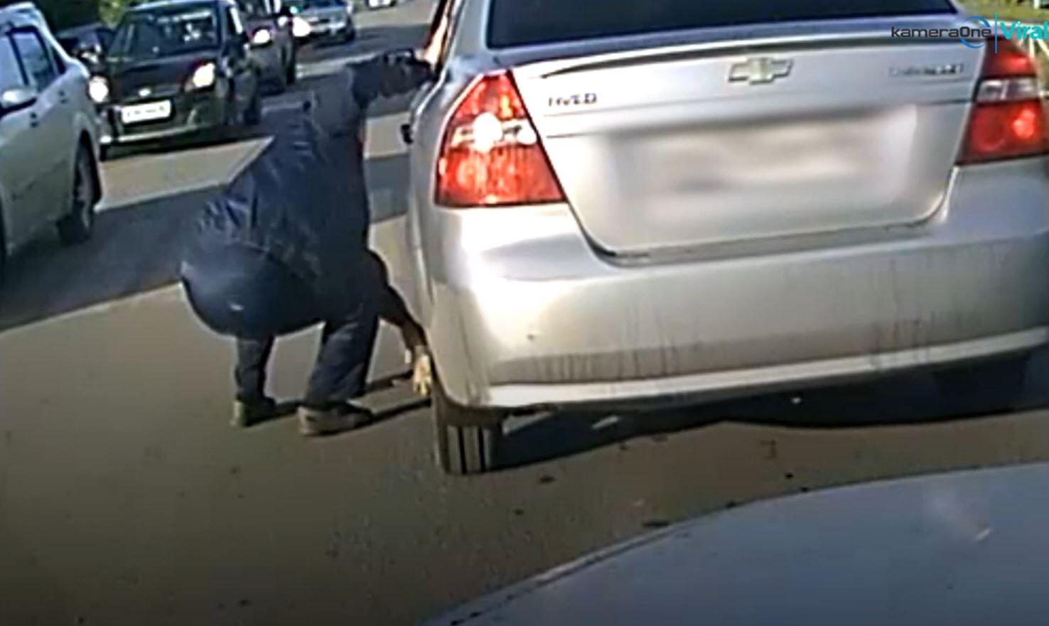 Bild zu Katze unter einem Auto