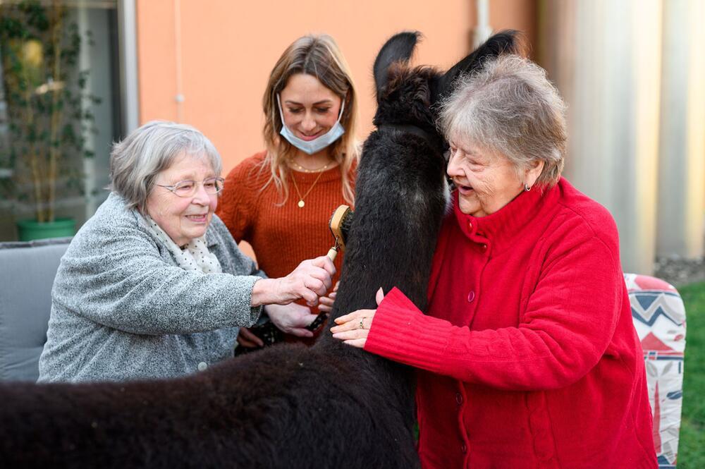 Therapie-Alpakas und Lamas im Seniorenheim Rudolstadt
