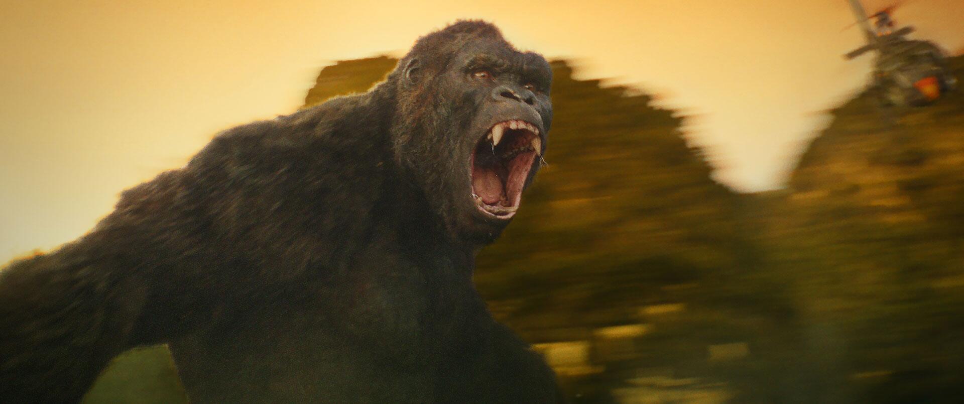 Bild zu Kong_clip