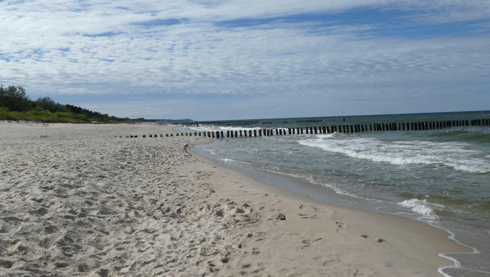 Bild zu Vibrionen, Ostsee, Vibrio-Bakterien