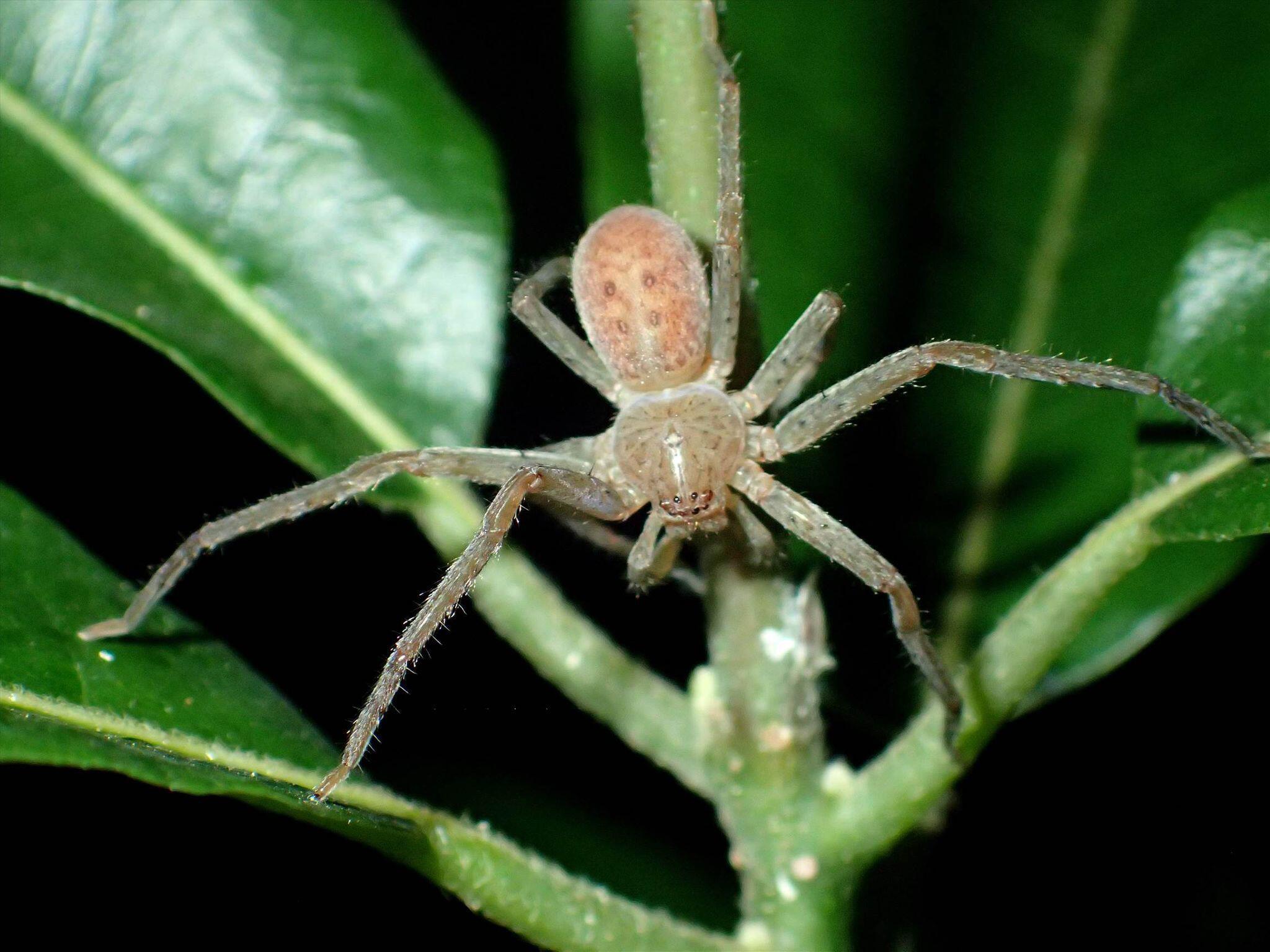 Bild zu Spinnen nach Klima-Aktivistin Greta Thunberg benannt
