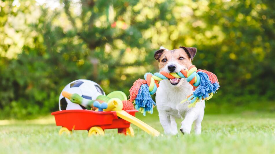 Hund, Haustier, Spaziergang, Gassi gehen, Outdoor, Tiere, Leine, Zubehör, Spielzeug,