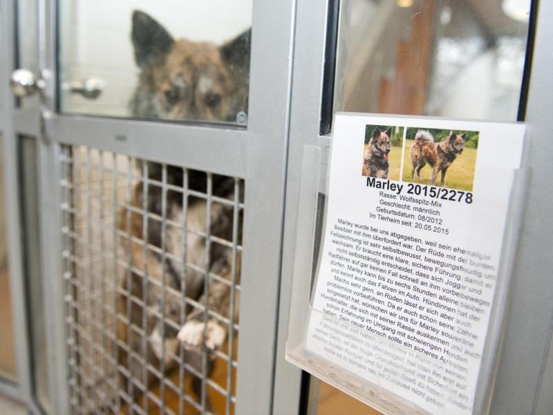 Bild zu Tierheim-Boxen