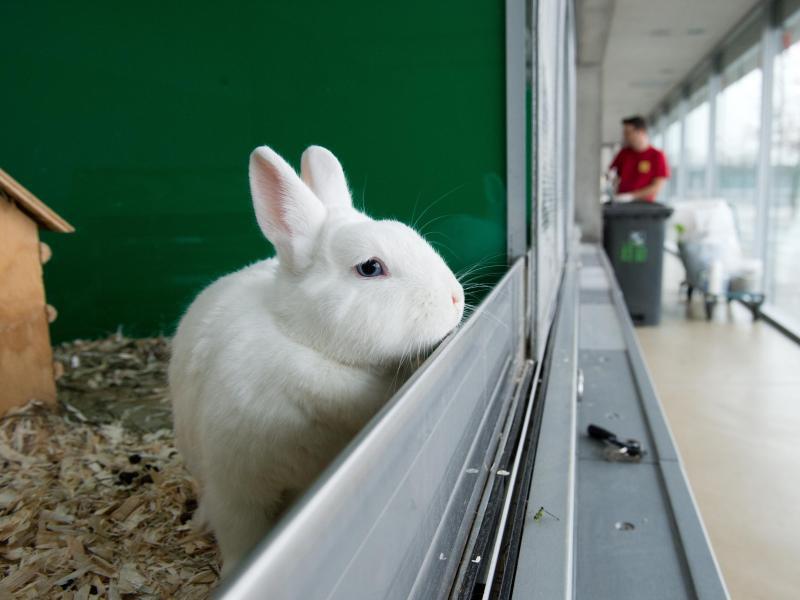 Bild zu Angora-Mix-Kaninchen