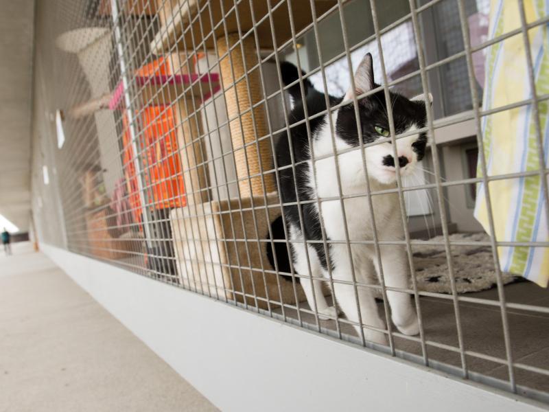 Bild zu Katze im Tierheim Berlin