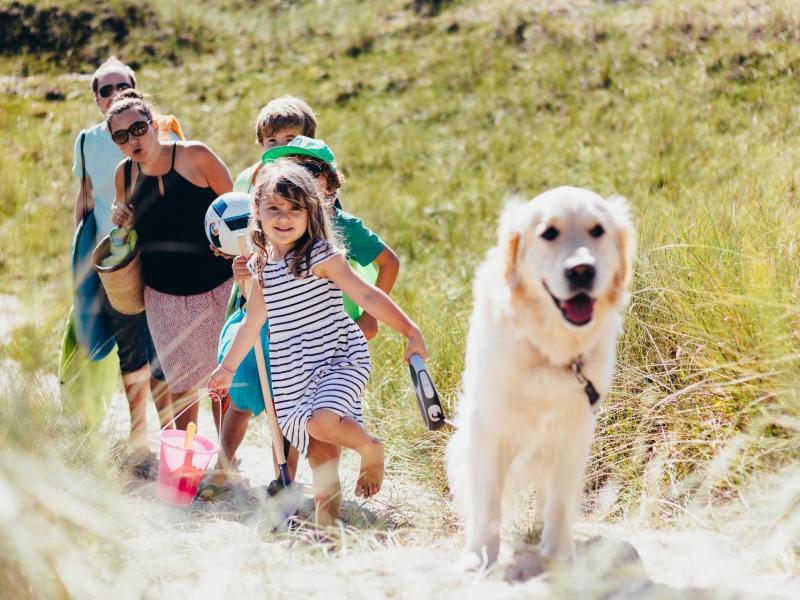 Bild zu Urlaub mit Haustier