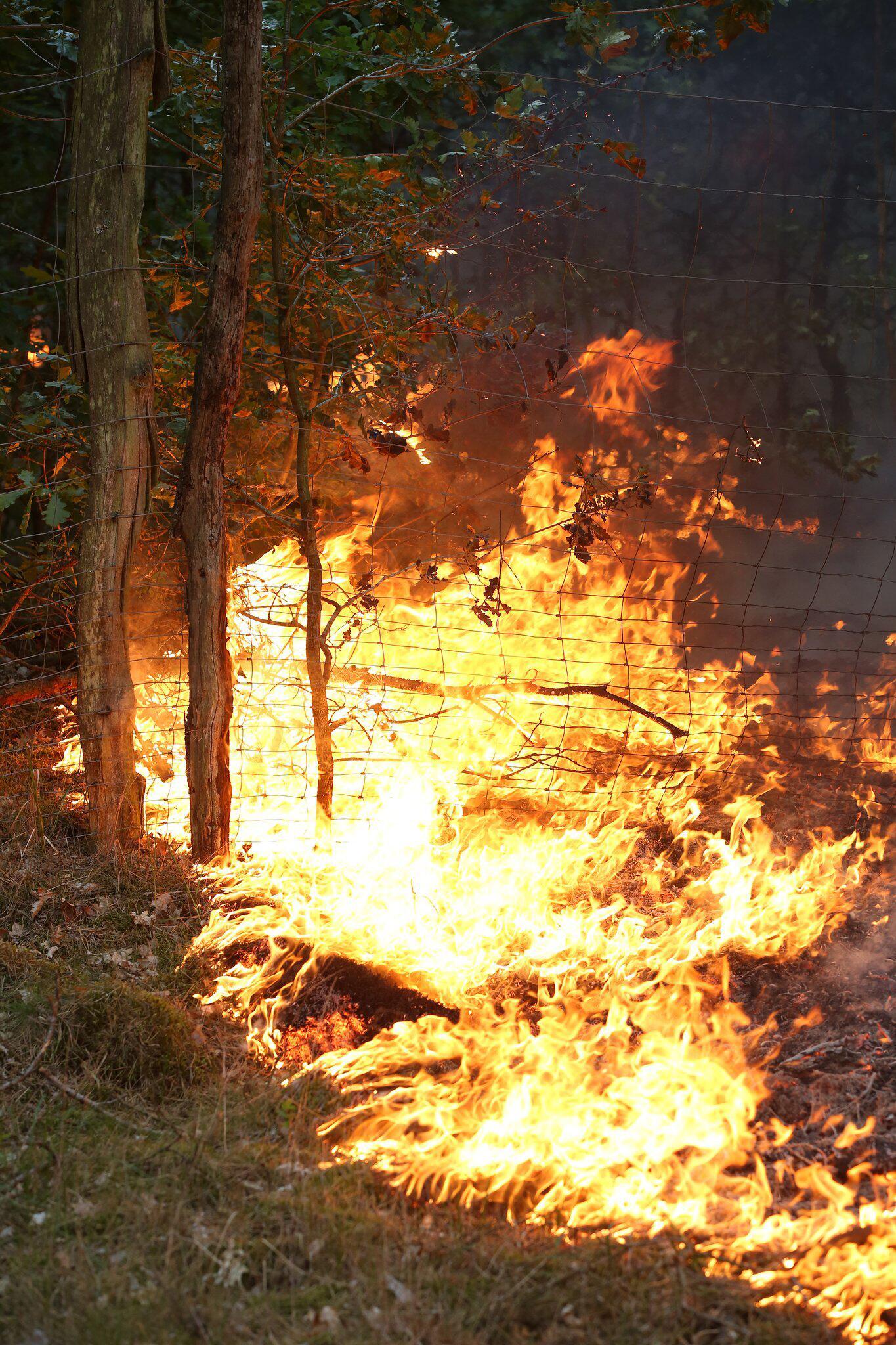 Bild zu Waldbrand bei Lübtheen