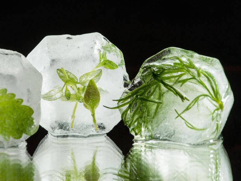 Bild zu Kräuter in Eis
