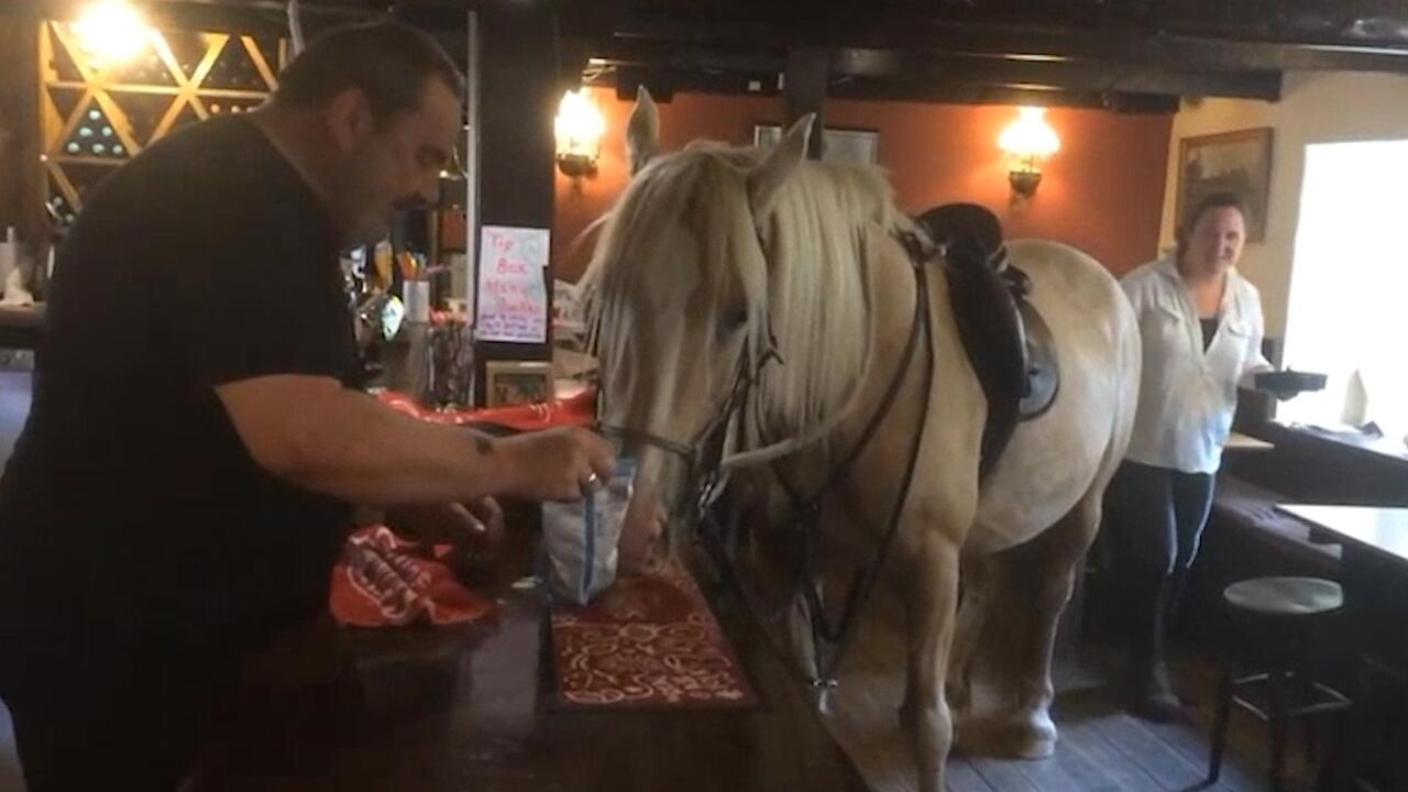 Bild zu England: Pferd geht in den Pub und frisst Chips