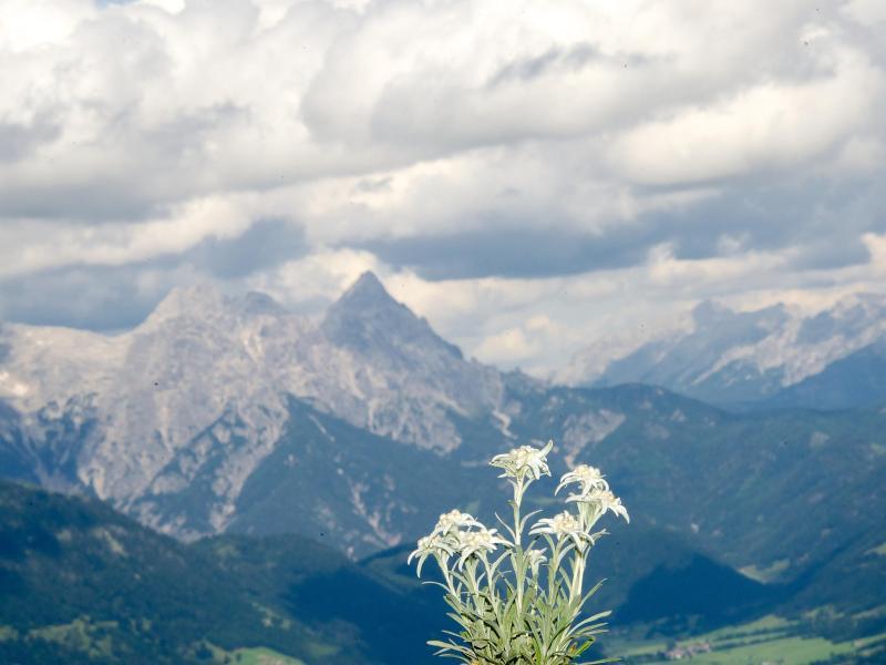 Bild zu Kitzbüheler Alpen