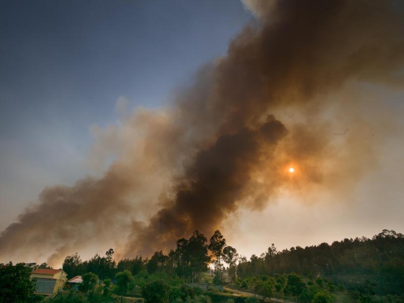Bild zu Waldbrände in Portugal