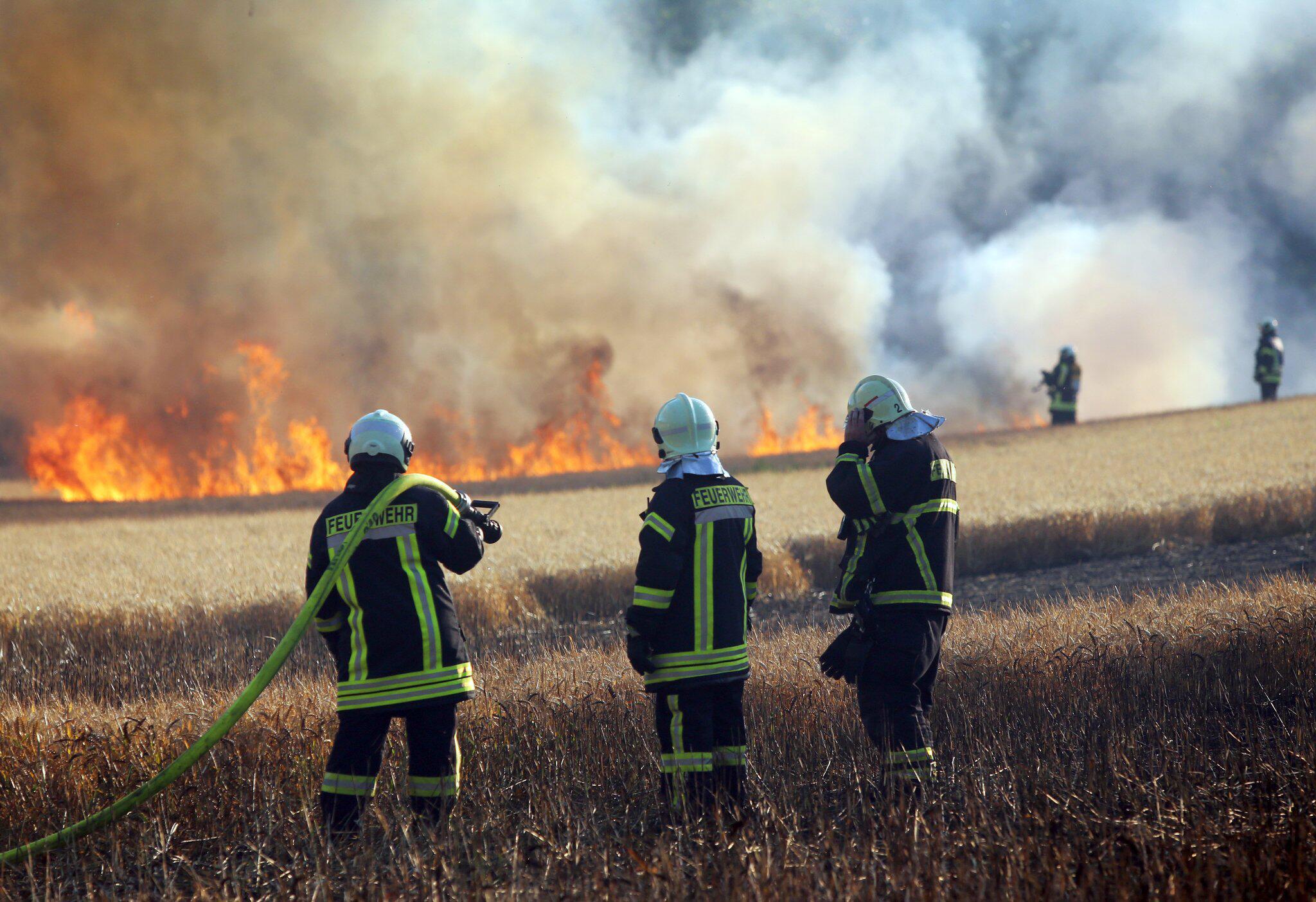 Bild zu Getreidefeld in Rostock brennt