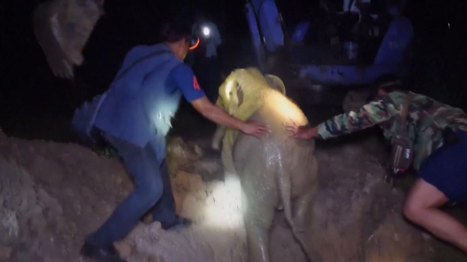 Bild zu Elefantenbaby gerettet