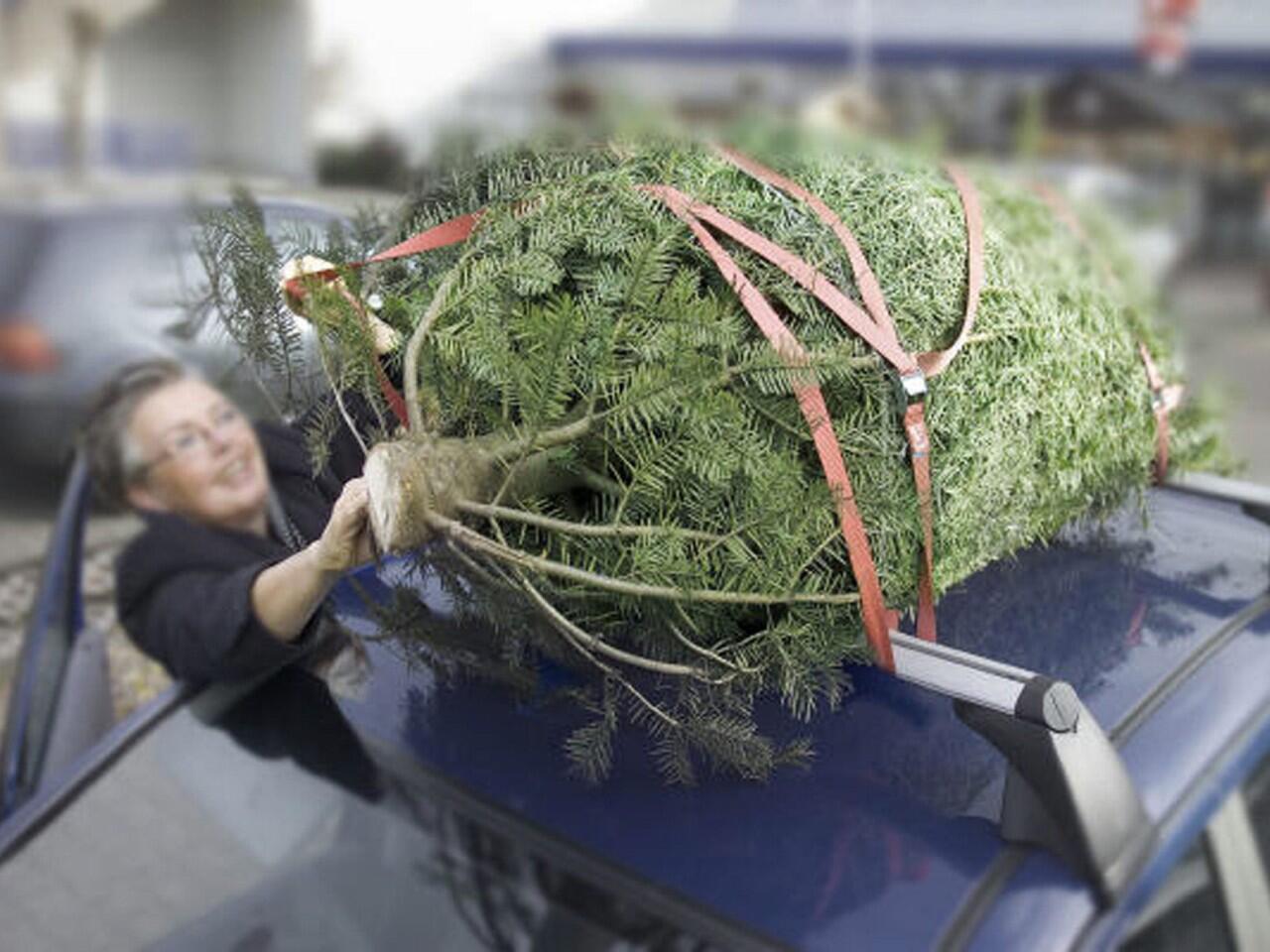 Weihnachtsbaum transportieren: So kommen Sie und der Baum sicher ans ...
