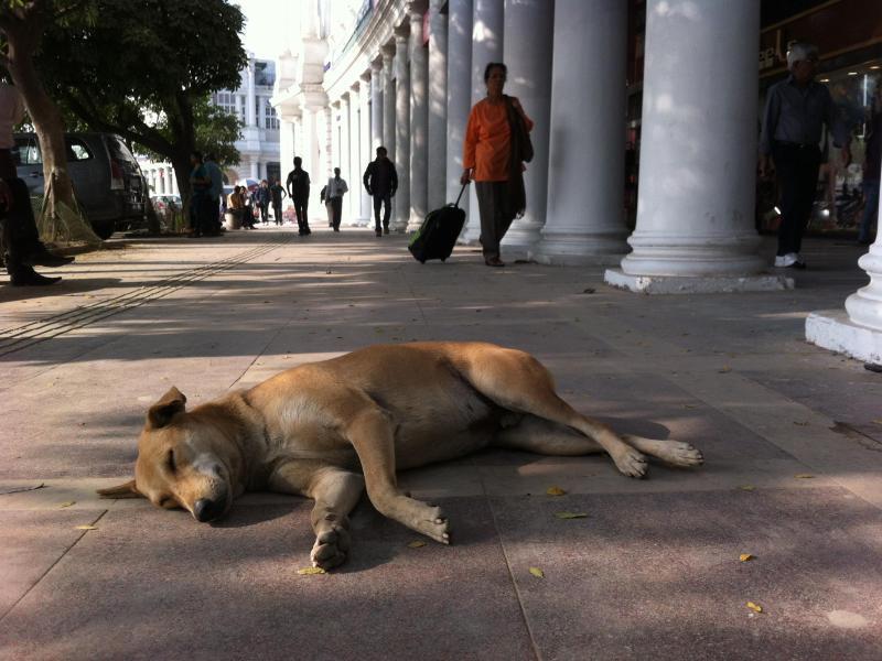 Bild zu Tollwut in Indien