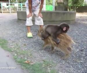 Tiere auf Tiere