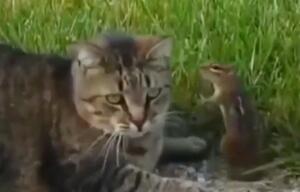 Katze, Streifenhörnchen