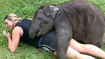 Bild zu Elefantenbaby will kuscheln