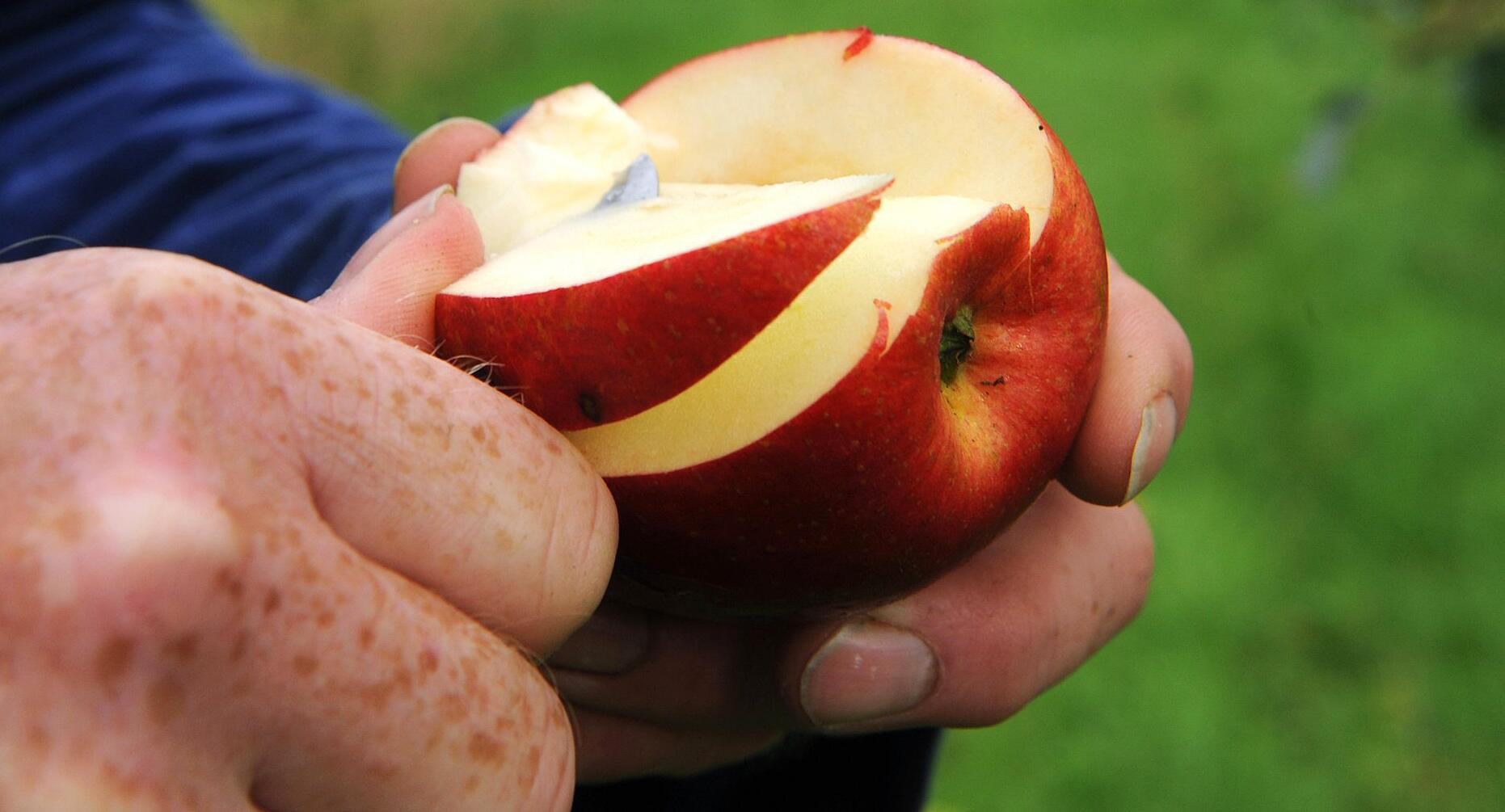 Bild zu Studie: Wie Raucher und Trinker von Äpfeln und Tee profitieren