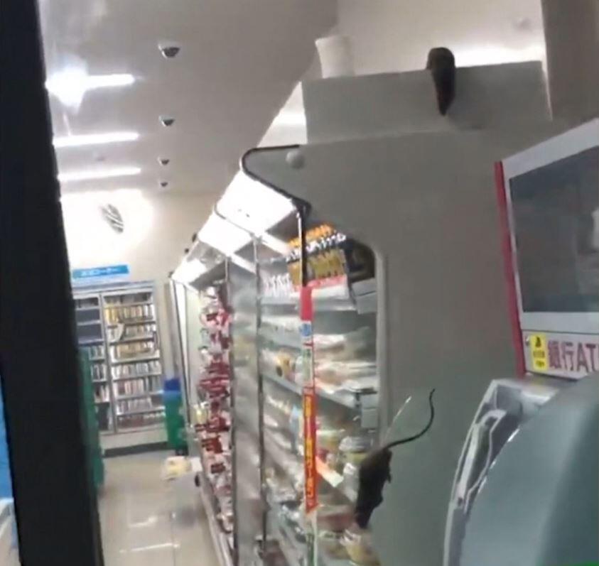 Bild zu Ratten, Japan, Supermarkt