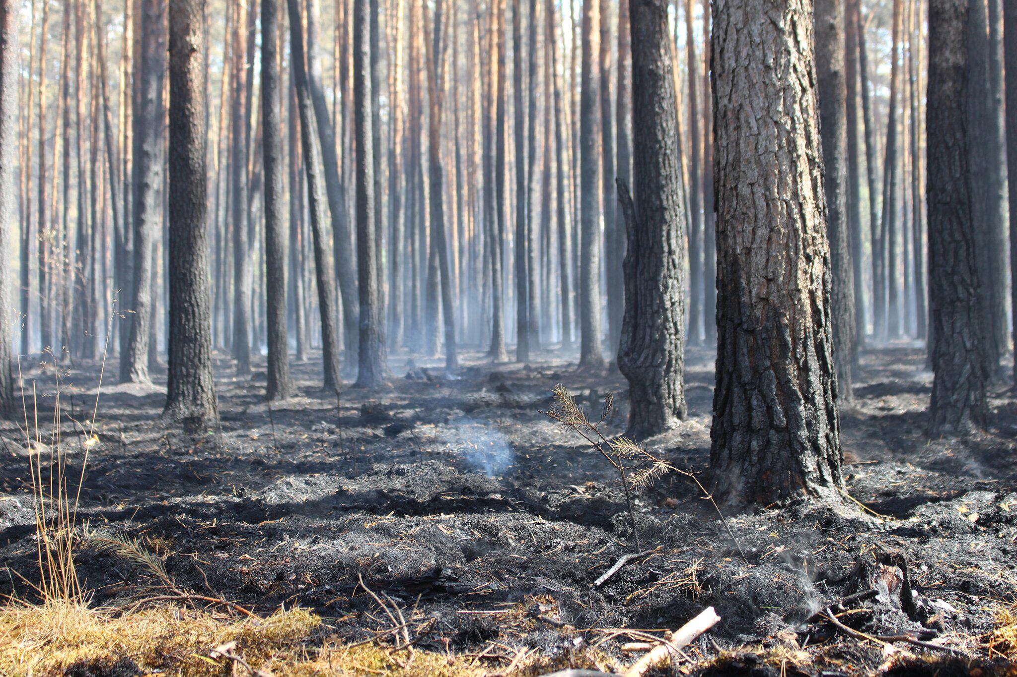 Bild zu Situation bei Waldbrand bleibt brenzlig