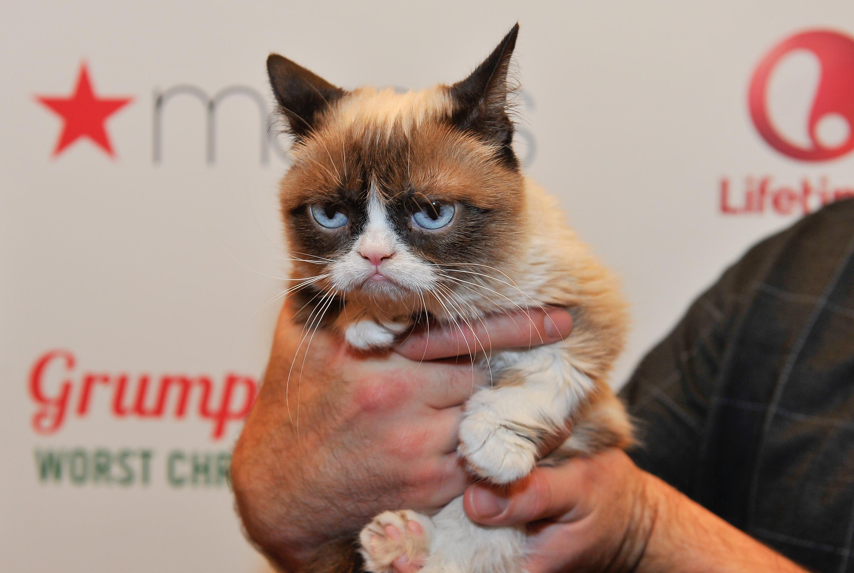 Bild zu Grumpy Cat