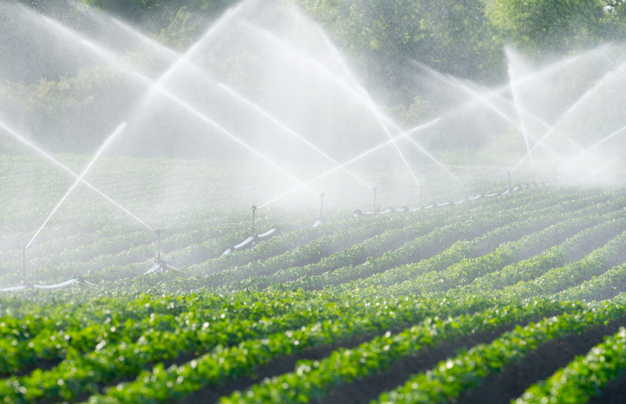 Bild zu Wasser sparen: Weniger Fleisch und mehr Obst aus der Region