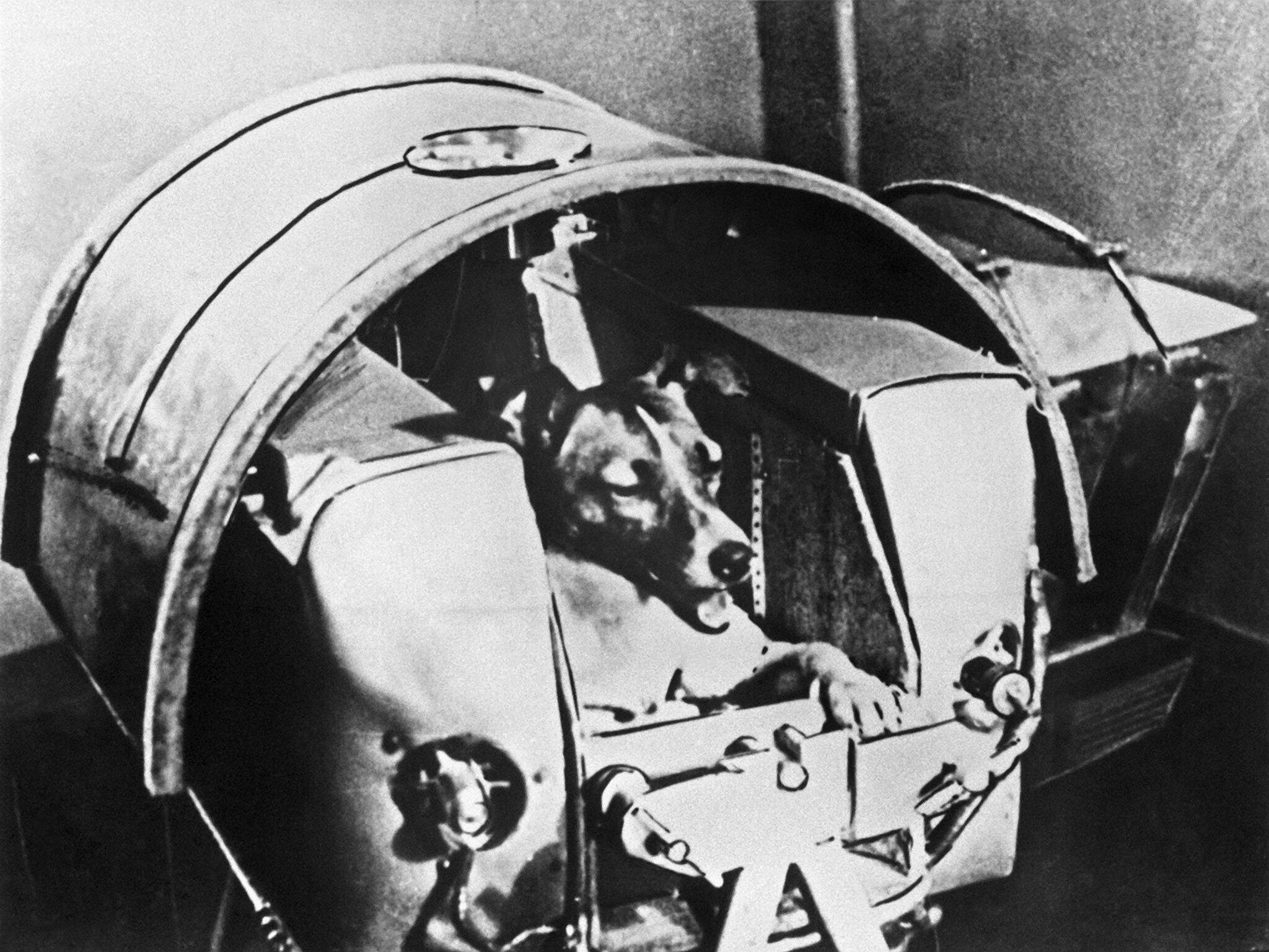 Bild zu 60. Jahrestag des Raumflugs der Hündin «Laika»