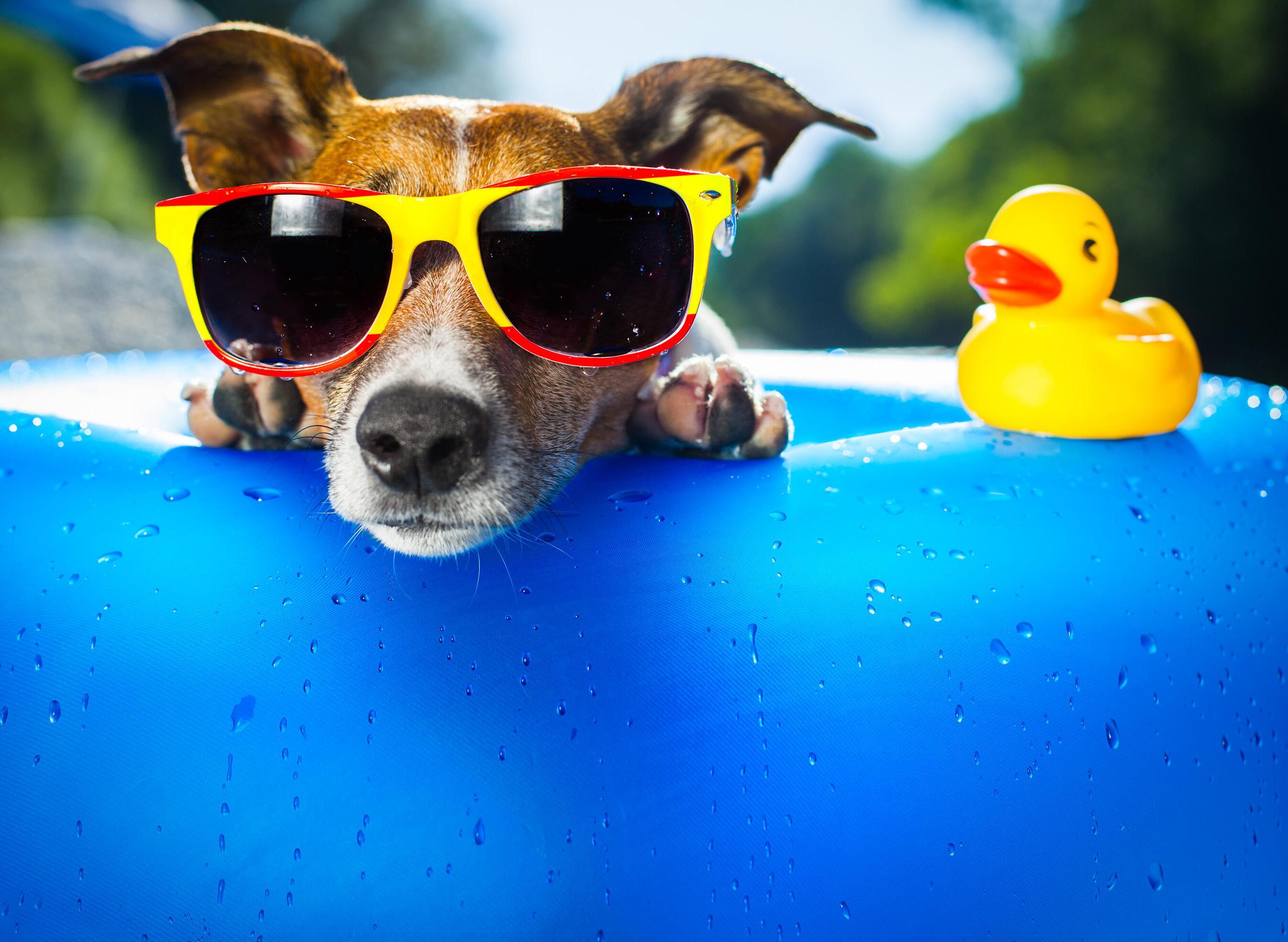 Bild zu So überstehen Hunde die Hitze