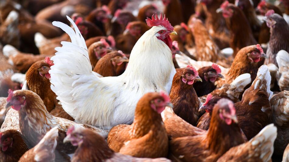 Gefahr durch Vogelgrippe in Baden-Württemberg zunächst gebannt