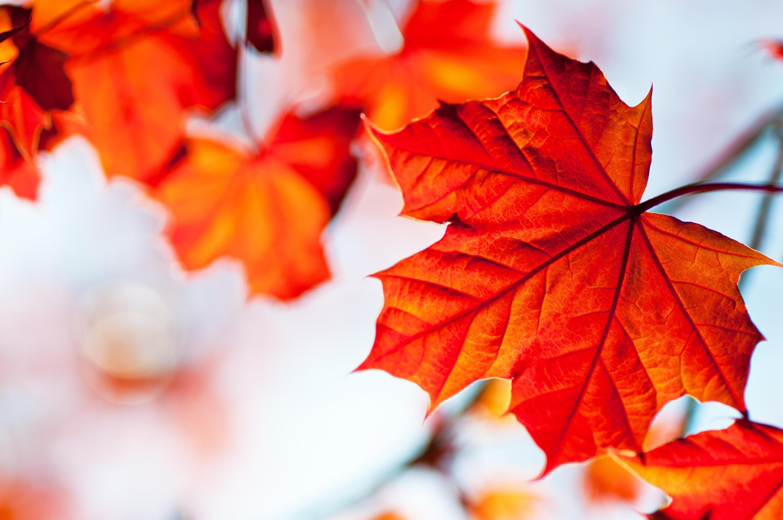 Bild zu Herbst, Blätter, Kerzen, gemütlich, Laternen, Dekoration, Deko, DIY, basteln, Kinder