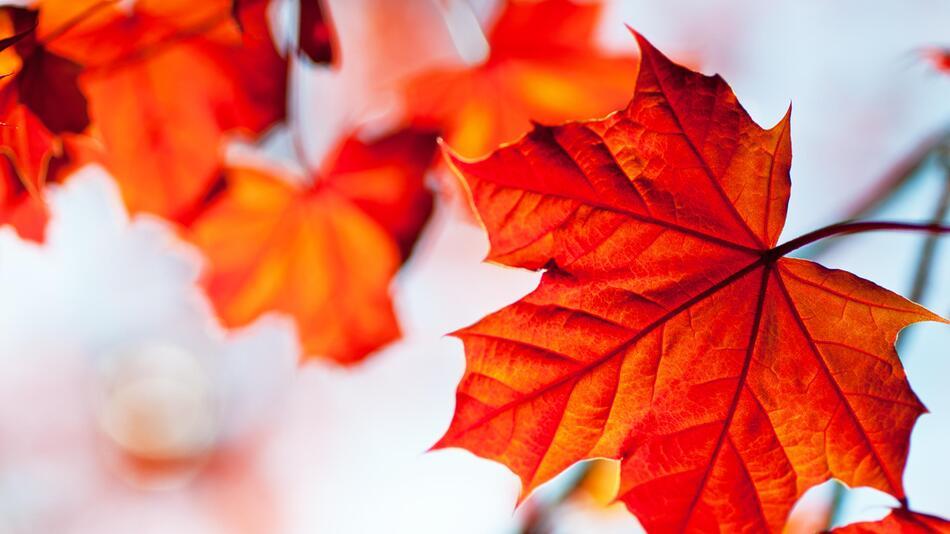 Herbst, Blätter, Kerzen, gemütlich, Laternen, Dekoration, Deko, DIY, basteln, Kinder
