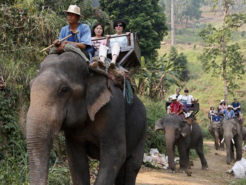 Bild zu Touristen reiten auf Elefanten