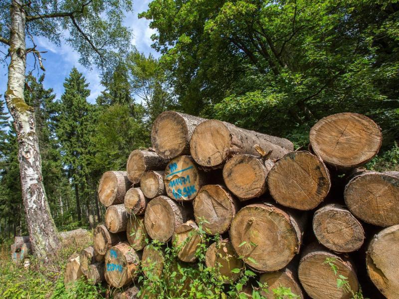 Bild zu Holzstapel