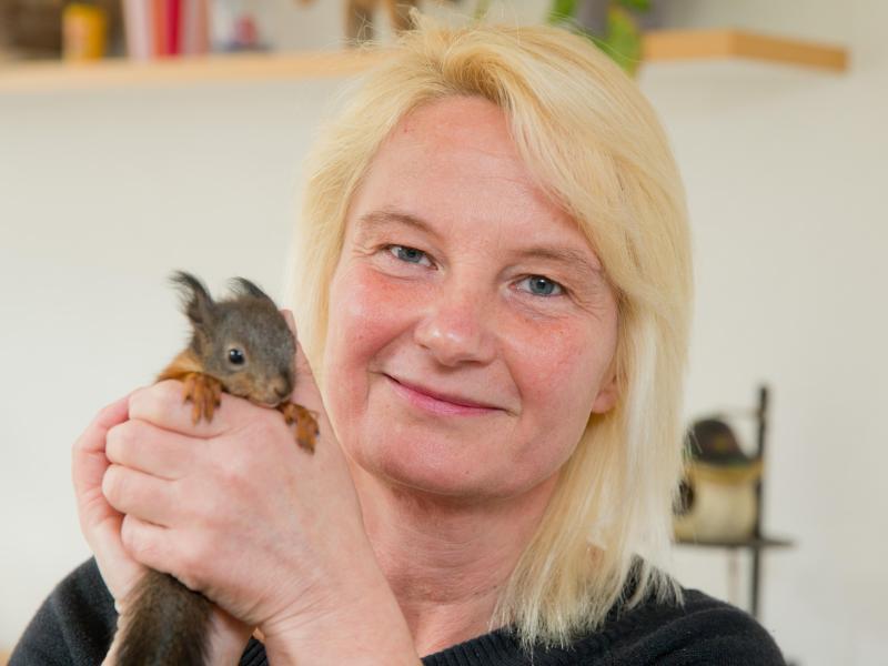 Bild zu Eichhörnchen-Auffangstation