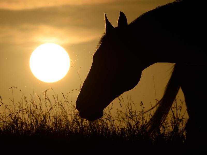Bild zu Pferd vor untergehenden Sonne