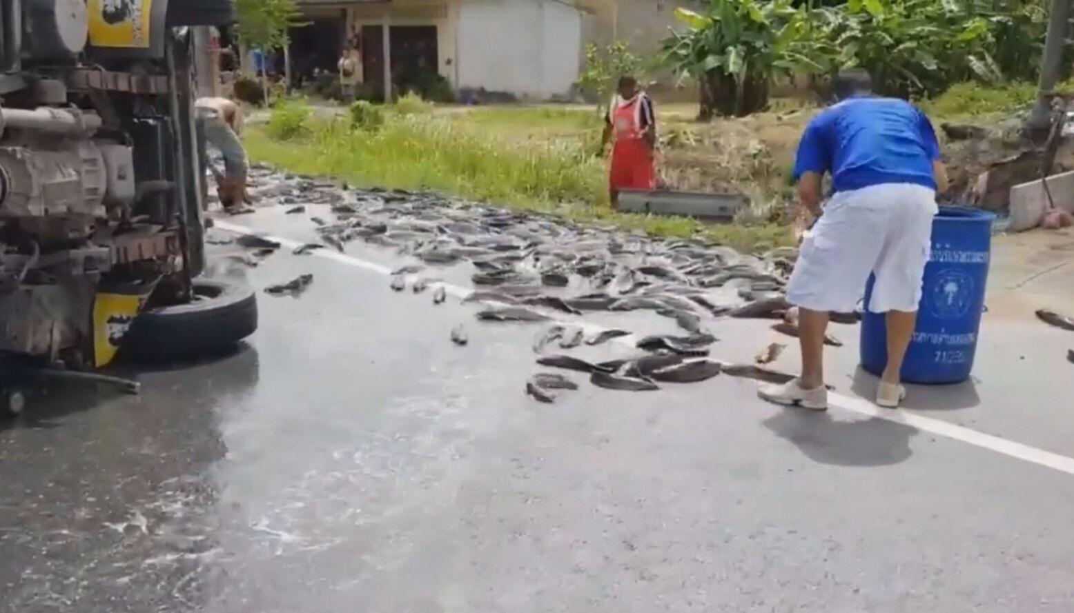 Bild zu Thailand, Unfall, Fische, Welse