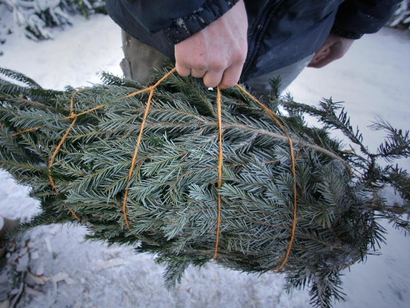 Bild zu Weihnachtsbaum-Kauf