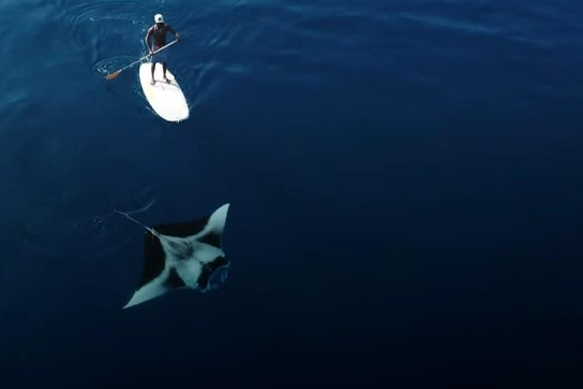 Bild zu Mantarochen, Malediven,