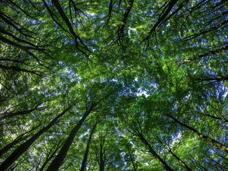 Bild zu Wald