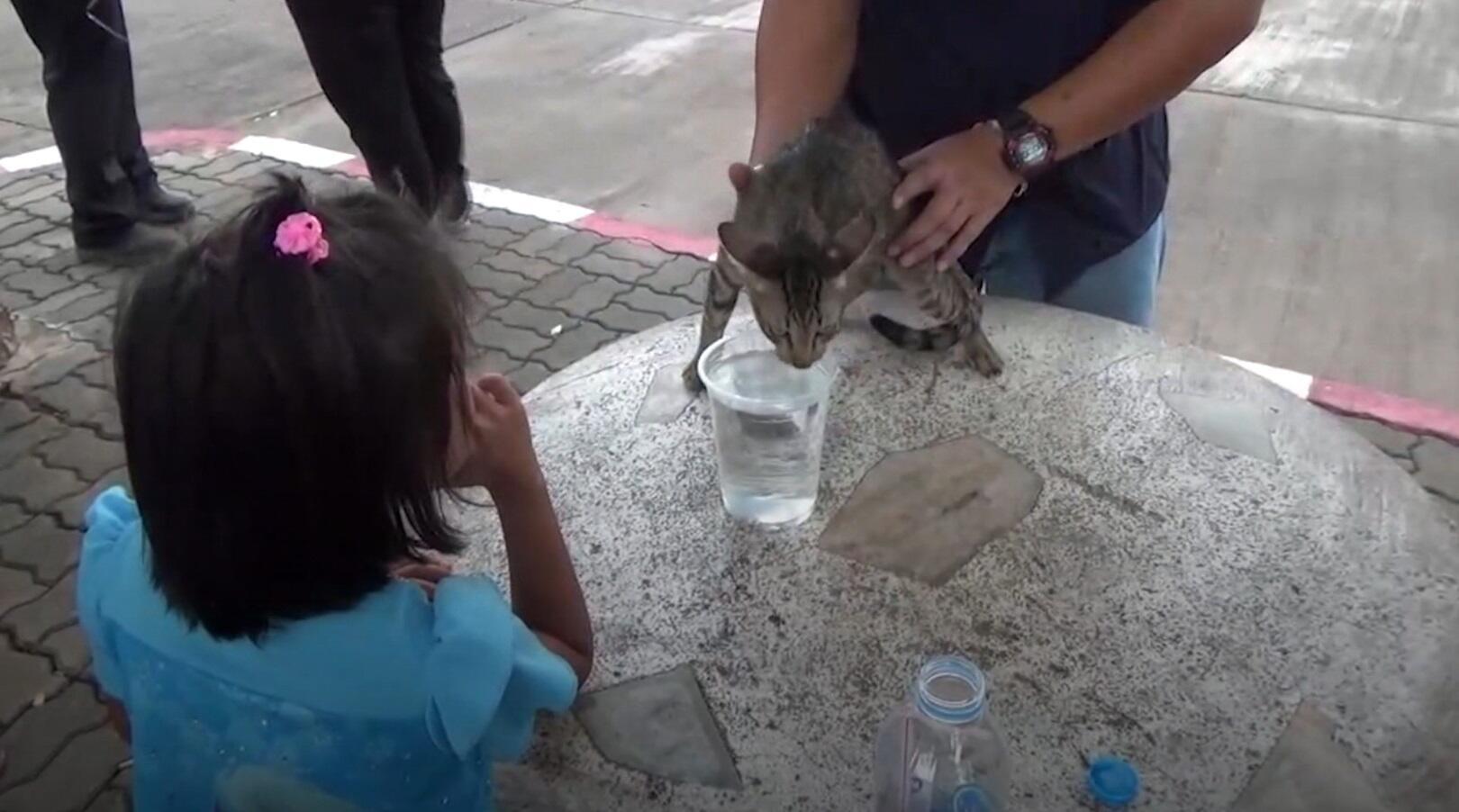 Bild zu Katze