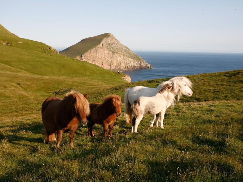 Bild zu Drei Ponys
