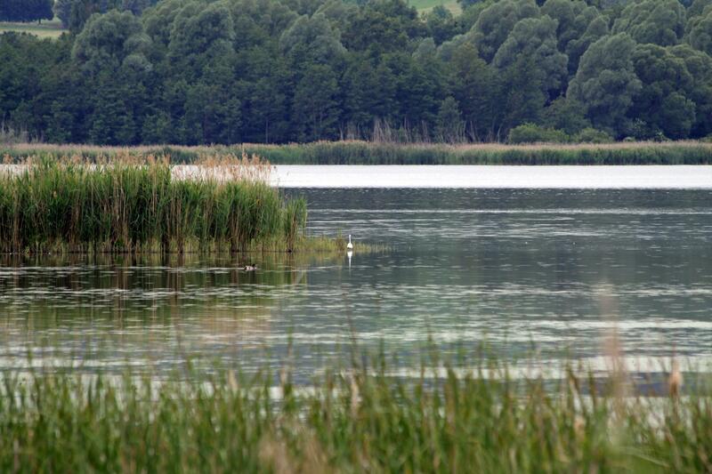 Bild zu Kis-Balaton