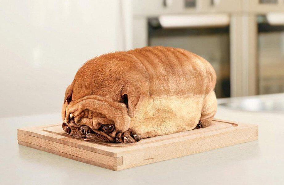 Bild zu Hund auf Brot