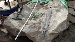 Dino-Kiefer in Steinbruch entdeckt