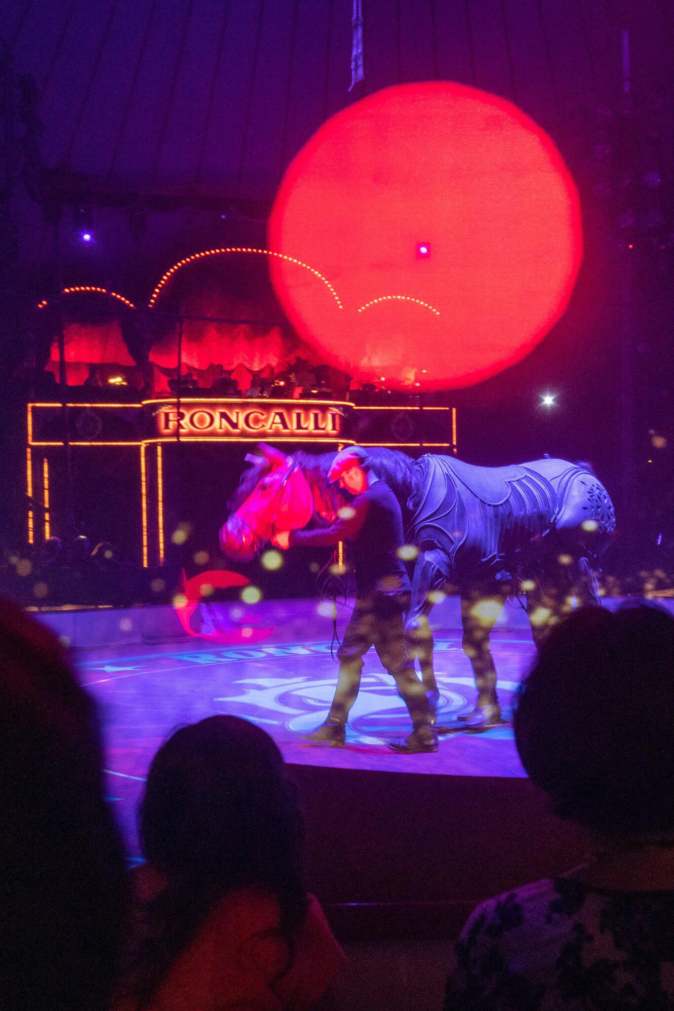 Bild zu Zirkus Roncalli