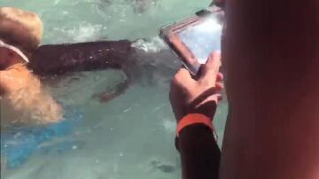 Bild zu Ammenhai, Schwimmen, Junge, Biss, Schock