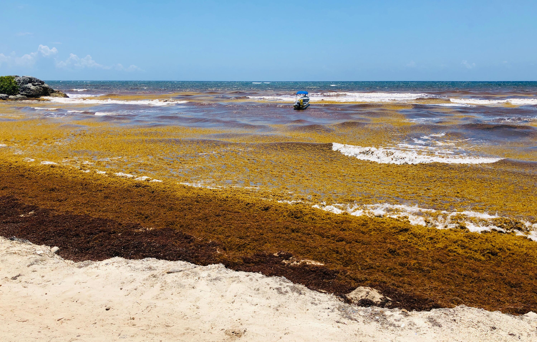 Bild zu Algen, Strand, Mexiko, Sargassum, Tulum, Quintana Roo, Karibik