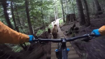 Bild zu Bär beim Mountainbiken